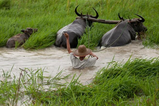 Myanmar Rainy Season